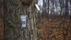 "Humber Arboretum has partnered with the Association for Canadian Educational Resources to ""cache"" and monitor Arb trees with scannable QR code tags, helping visitors identify and learn more about individuals trees and their member species.   Photo by Nick Jean"